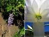 La Casona Solariega - Flores del Patio